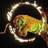 Цирки в Новозыбкове