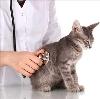 Ветеринарные клиники в Новозыбкове